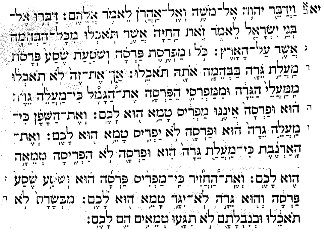 scan of Leviticus [Hebrew]