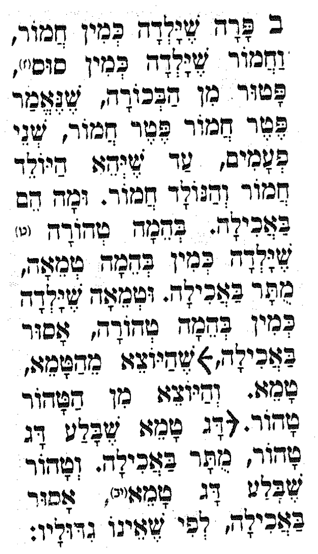 scan from Mishnah Bechorot [Hebrew]